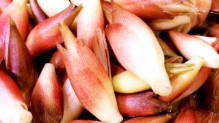 α-ピネンの効果・効能・摂り方まとめ。みょうがの香りで夏バテ対策!