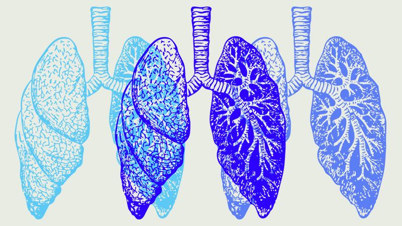 エキナセア 呼吸器 肺 喘息
