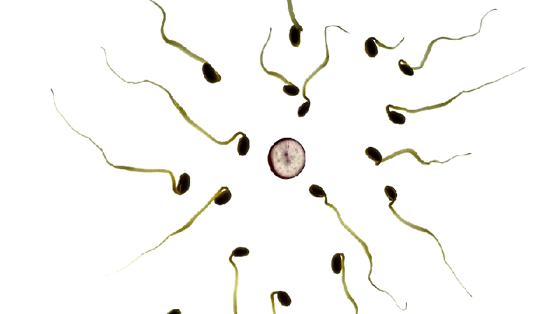 精子カルシニューリンとは