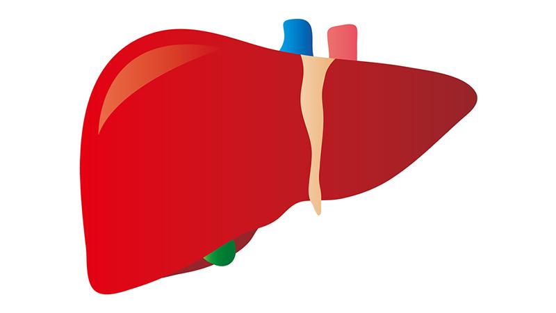 βクリプトキサンチン 肝臓