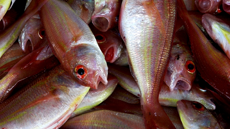 水銀 魚 まぐろ
